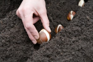 Planting seeds in the web